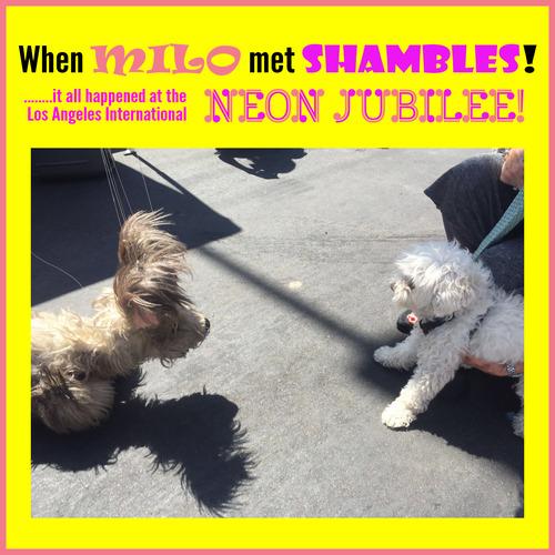 Neon Jubilee!